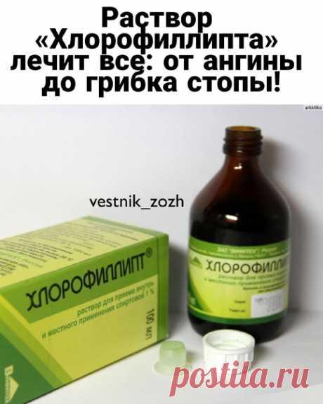 Раствор «Хлорофиллипта» лечит все: от ангины до грибка стопы!  Эвкалипт в медицине известен как естественный антибиотик. В «Хлорофиллипте» используется экстракт листьев растения и вспомогательные вещества (спирт, масло и другие). Лекарство проверено не единожды, и не только при многочисленных заболеваниях горла и ротовой полости! Этот натуральный антибиотик отлично справляется с гнойными ранами, фурункулами и различного рода высыпаниями. Даже летом пригодится — в борьбе с ...