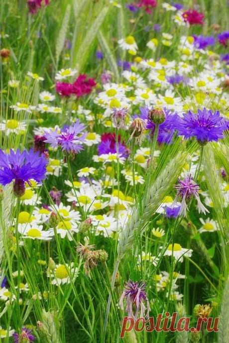 Я грущу о тебе, уходящее Лето… Забираешь с собой Ароматы Цветов…
