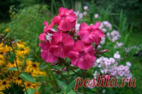 Практично: сеем цветы под зиму