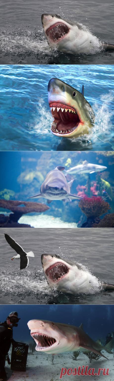 Правила общения с акулой: сразу бить в нос или обнять и погладить?   Обучение