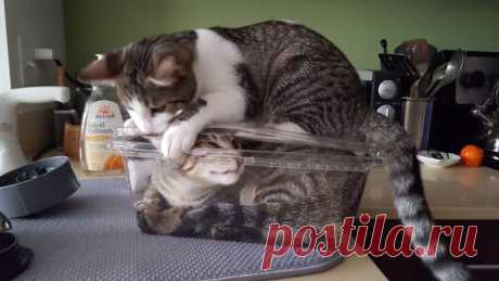Коты, которые совсем стыд потеряли