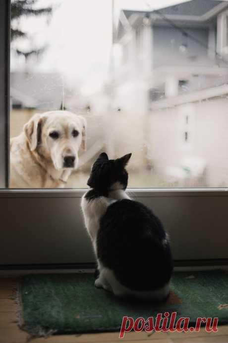 Сильные эмоции умееют испытывать не только люди, но и кошки с котиками. Фотоподборка интересных моментов🐈.   Амели.мр   Яндекс Дзен