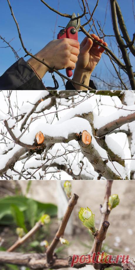 Распространенные ошибки садоводов при обрезке деревьев и кустарников