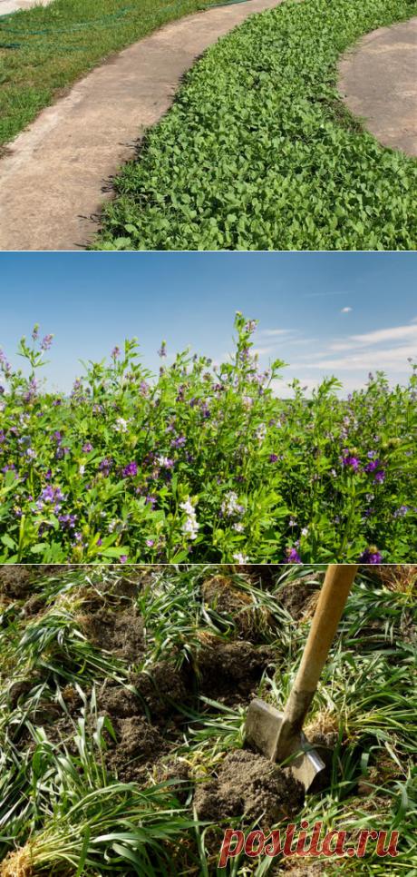 Виды сидератов, их польза и сроки посева
