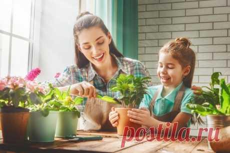 Желтые листья комнатных растений: причины и методы борьбы