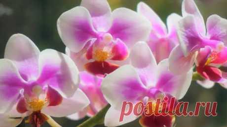 Орхидеи: советы по уходу для начинающих - Цветочки - медиаплатформа МирТесен