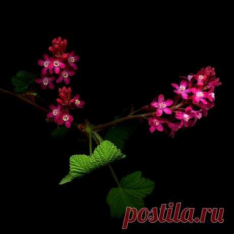 Фото. Цветы.