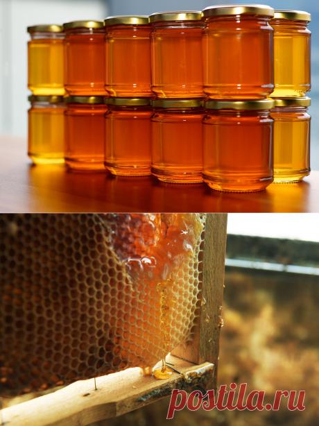 Честный мёд: как не нарваться на подделку - L!FE.ru