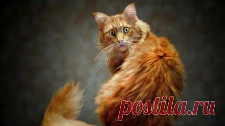 Чем вывести запах кошачьей мочи: эффективные способы с помощью народных средств