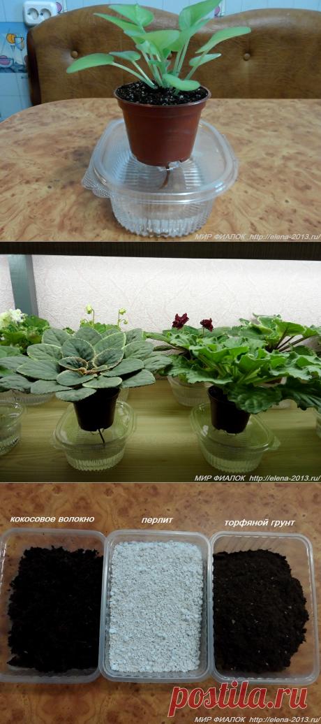 статьи по уходу и размножению комнатных растений