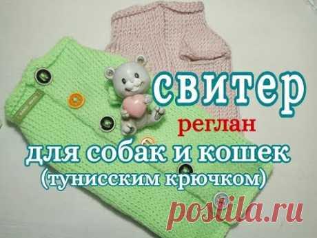 Свитер для собаки и кошки тунисским крючком, Реглан, for dogs tunisian crochet