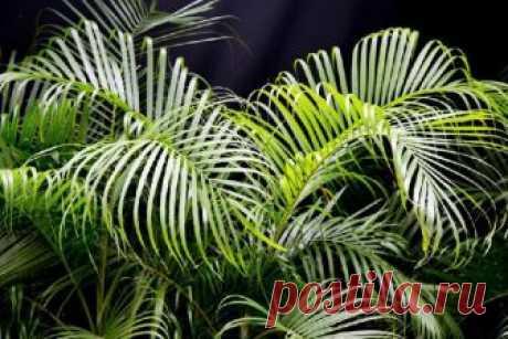 Они даже ночью выделяют кислород… 9 растений, которые хорошо иметь в спальне Растения – это живые существа, которым свойственно дыхание. Они потребляют кислород и производят углекислый газ, преобразуемый в полезные органические вещества в листьях в результате фотосинтеза под воздействием естественного освещения...