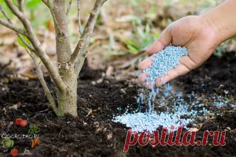 Минеральные удобрения, их виды и характеристика – нужно знать каждому дачнику   Зачастую, минеральные удобрения, их виды и характеристика вводят в заблуждение многих дачников не только своим названием, но и составом. Как разобраться и понять, что нужно для овощей, деревьев, кус…