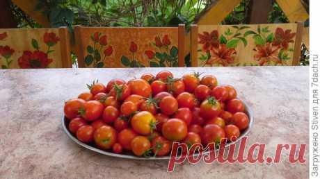 Маринованные помидоры. Рецепт очень вкусного рассола