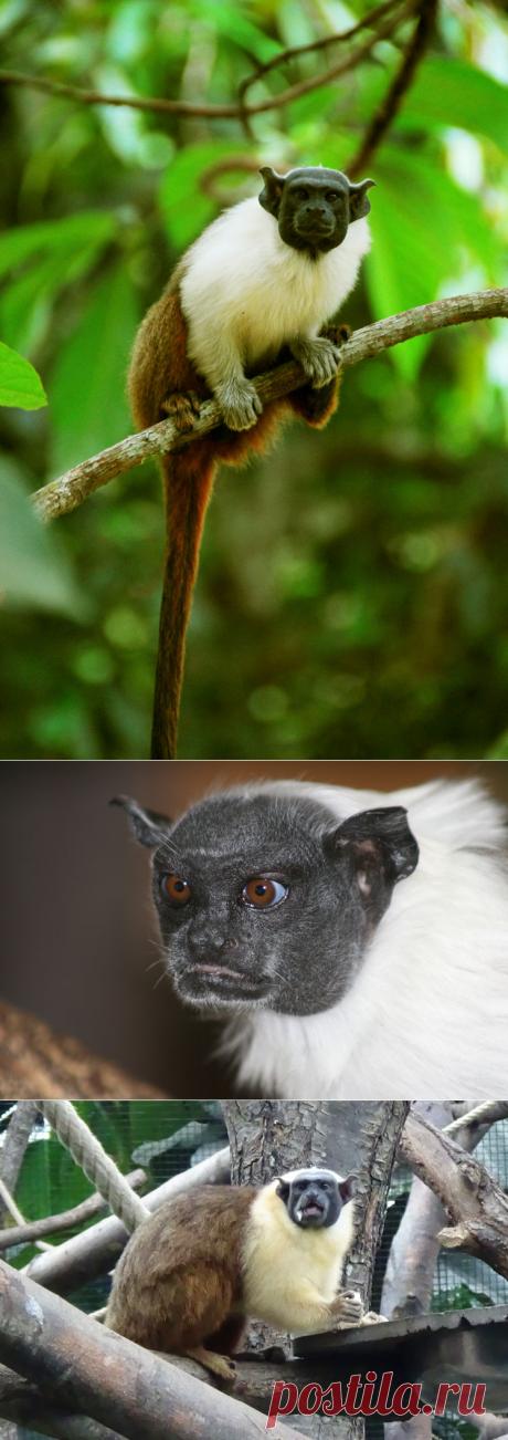 Самые необычные животные в мире (часть 30)