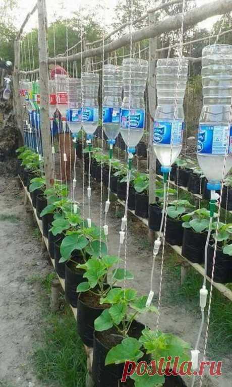 50 ценных огородных идей для высокого урожая и экономии сил | Живу за городом