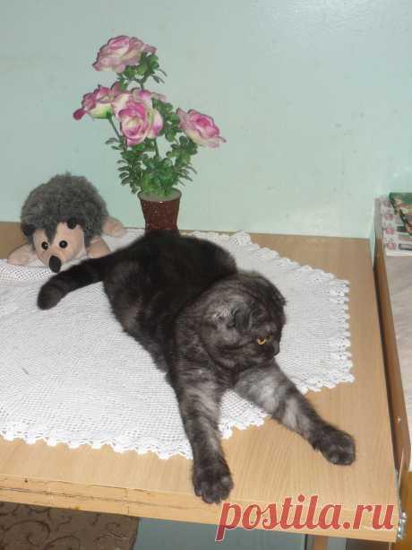 Кошка Жемчужинка