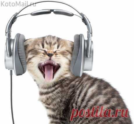 Отношение к жизни у меня музыкальное! Мне всё по БАРАБАНУ!