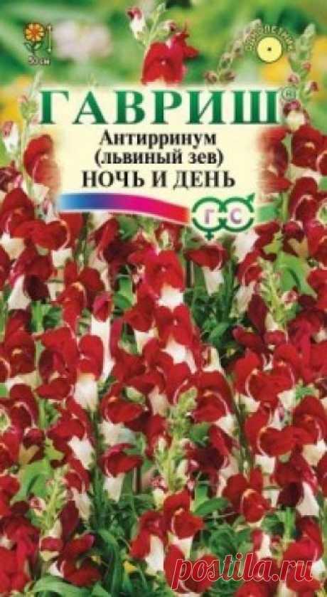 """Семена. Львиный зев """"Ночь и день"""" (вес: 0,1 г) Всхожесть: 85%. Контрастные бело-красные цветки эффектно смотрятся в саду на клумбах, в бордюрах и рабатках. Растение высотой 50 см, культивируется как однолетник. Цветет с конца июня до поздних заморозков. Львиный зев холодостоек, светолюбив, к почвам нетребователен, в засушливый период..."""