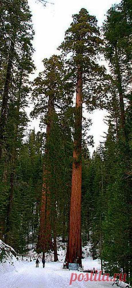легенды о дереве