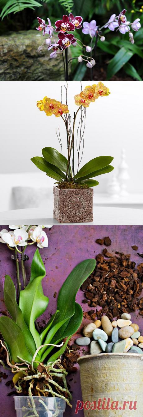 Почему не цветет орхидея — дельные советы цветоводов | Naget.Ru