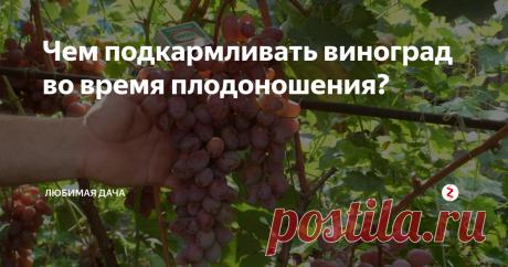 Чем подкармливать виноград во время плодоношения? Очень люблю песню Булата Шалвовича про виноградную косточку! Волшебные строчки о красоте жизни и ее плодах! И вот, надеюсь, у вас произошло то же самое, - ваш виноград обещает подарить вам спелые сочные грозди! Ну, песни - пенями, а растение надо подкормить. Я давно усвоила, что виноград надо подкармливать двумя способами: корневым и некорневым. Оба способа важны и незаменимы. Листья винограда отл