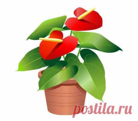 Фотографии для объявления № 26375840 - Барахла.Нет Челябинск