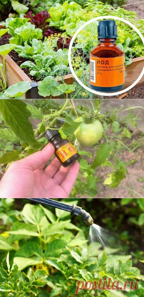 Как примененить йод на огороде: обзор способов использования