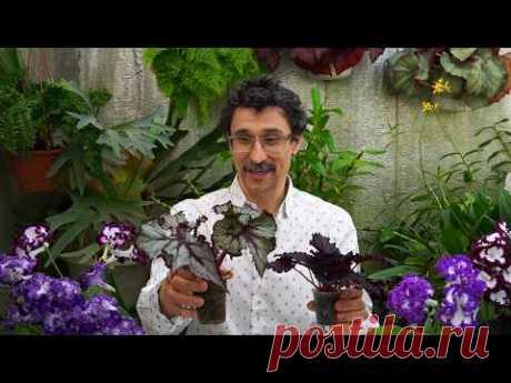 Самое главное удобрение для роста растений