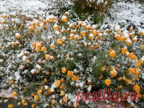 Вот и выпал первый снег.