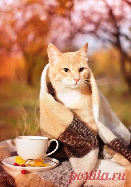 Настроение: жду Уютную осень...