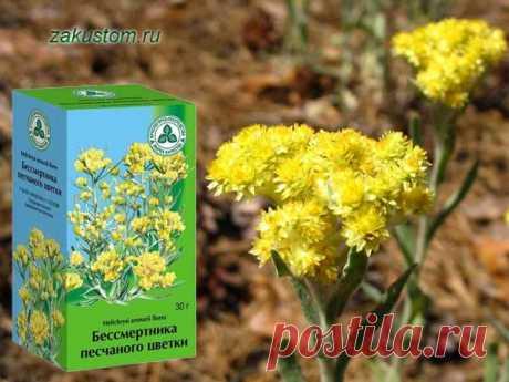 Лучшие желчегонные травы | Здоровье и красота в домашних условиях