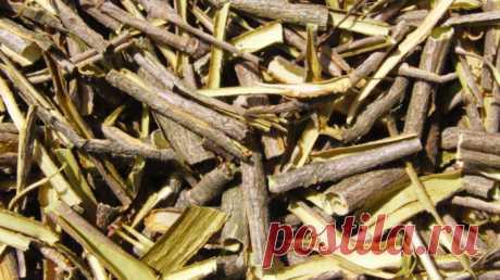 Какими лечебными свойствами обладает кора калины?