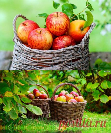 Яблочная диета - потеряйте до 4 кг за неделю здоровым путем! - Советы для женщин
