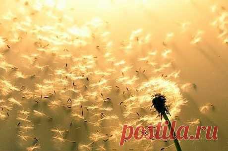 Жизнь состоит из маленьких мгновений Простых и восхитительных явлений…