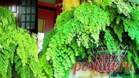 Быстро растут и не болеют! Супер средство для комнатных растений – Перекись