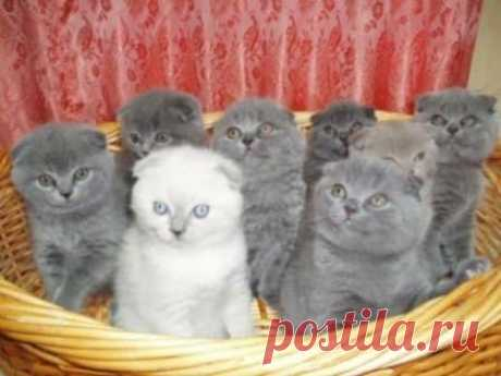 Кот или кошка - кто лучше?