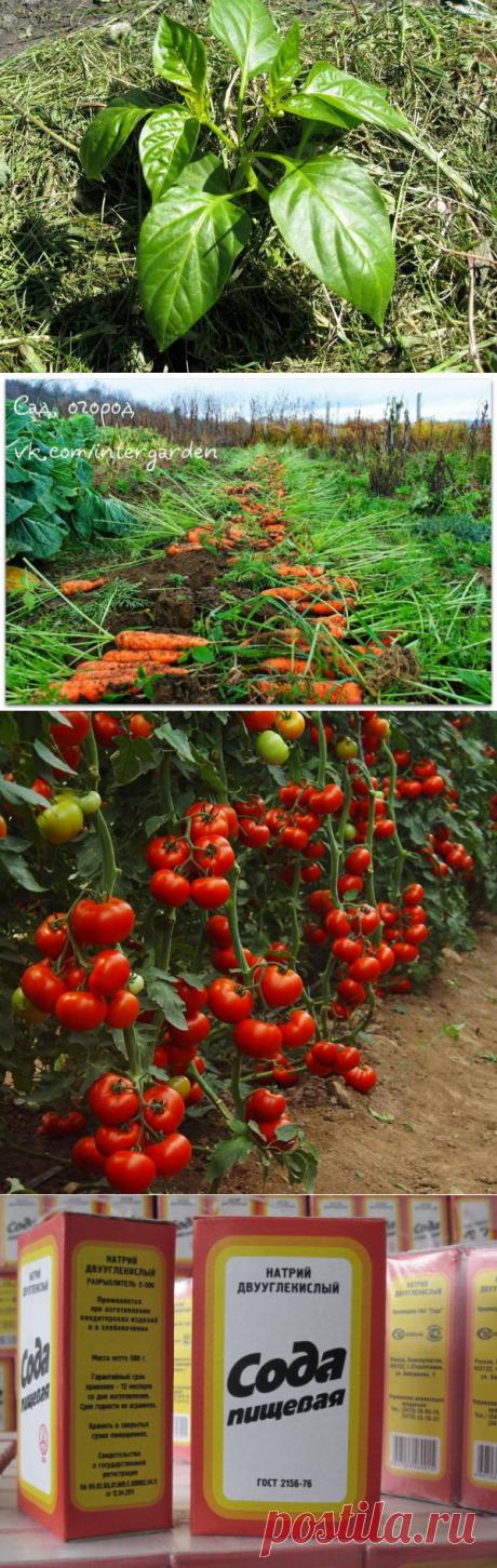 сад огород | Записи в рубрике сад огород | Дневник GRA_54