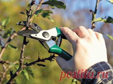 3 вида летней обрезки плодовых деревьев