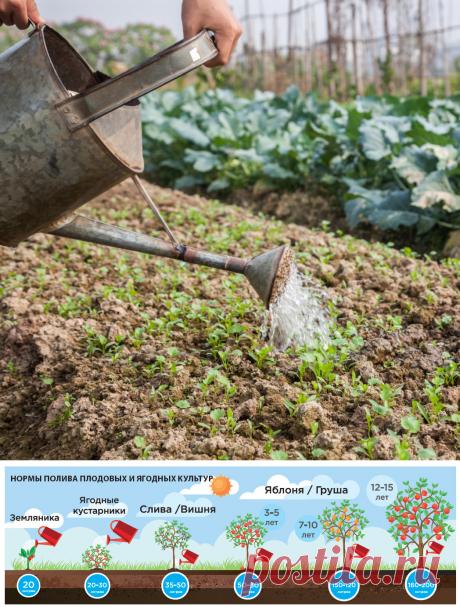 Сколько воды нужно каждому овощу - Садоводка