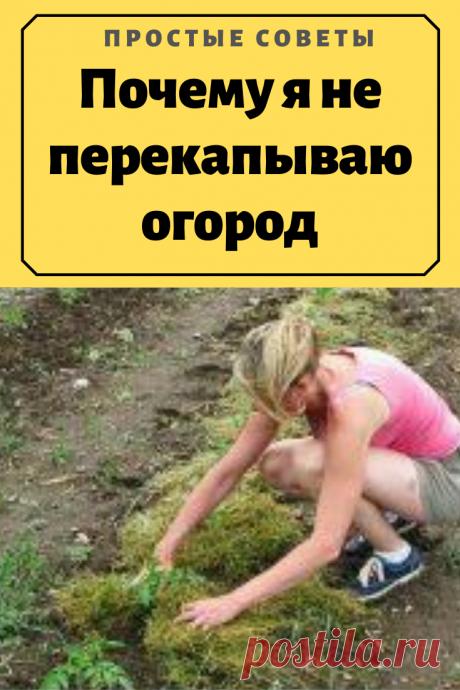 Почему я не перекапываю огород.«Я никогда ничего не копаю» — именно так мне сказала соседка, когда я у нее спросила, что она делает с сорняками?