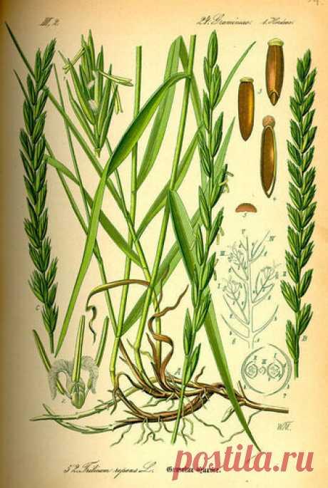 Гнать соли и чувствовать себя лучше — в природе нет сорных трав   Здравие - блог Захара Журавлева