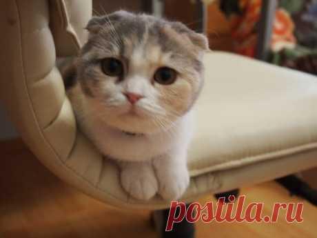 Сat-терапия, или Какие болезни лечат кошки?