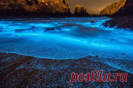 Светящийся планктон озаряет пляжи необычным голубым сиянием