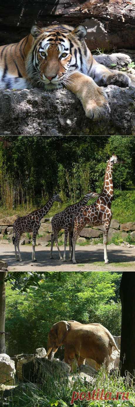ГЕРМАНИЯ. Дюйсбургский Зоопарк.