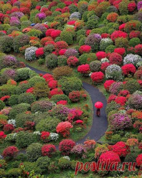 Оме, Япония