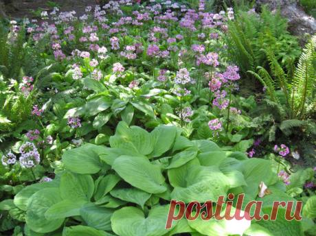 37 эффектных находок для вашего сада. Что посадить в тени?