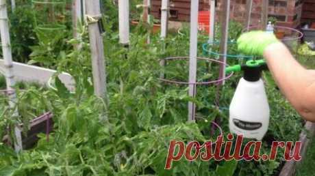 Сыворотка и йод для огурцов и томатов: как использовать?