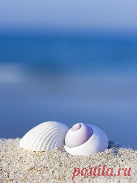 У моря иногда хороший характер, иногда плохой, и невозможно понять, почему. Ведь мы видим только поверхность воды. Но если любишь море, это не имеет значения. Тогда принимаешь и плохое и хорошее...  - Туве Янссон -