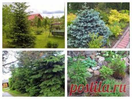 Домашний блог Валерии Питерской: Растения для ленивого сада.